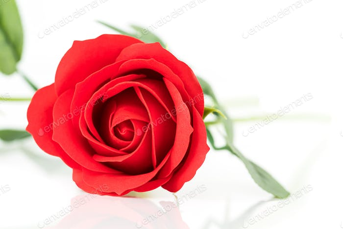 Single Red plastic fake roses on white_-6