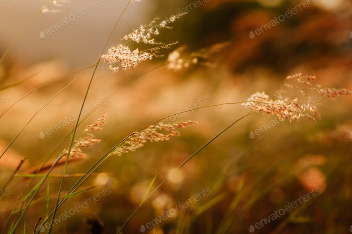 sunset grass and wildflowers