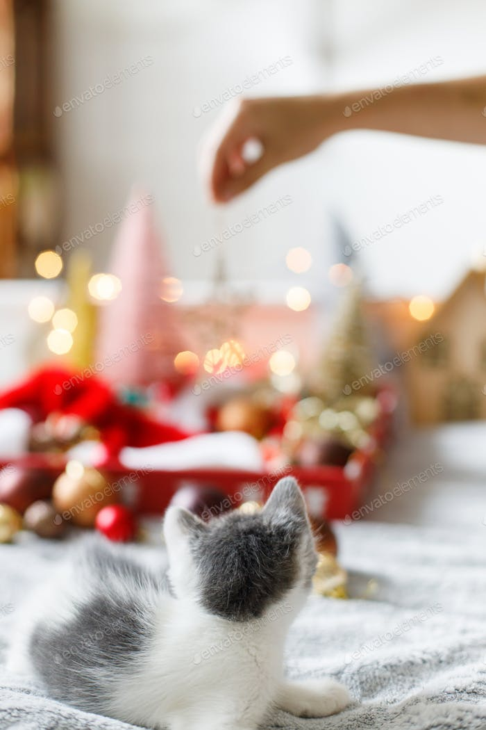Adorable kitten looking at christmas star, tree decorations and ornaments in lights. Cozy winter