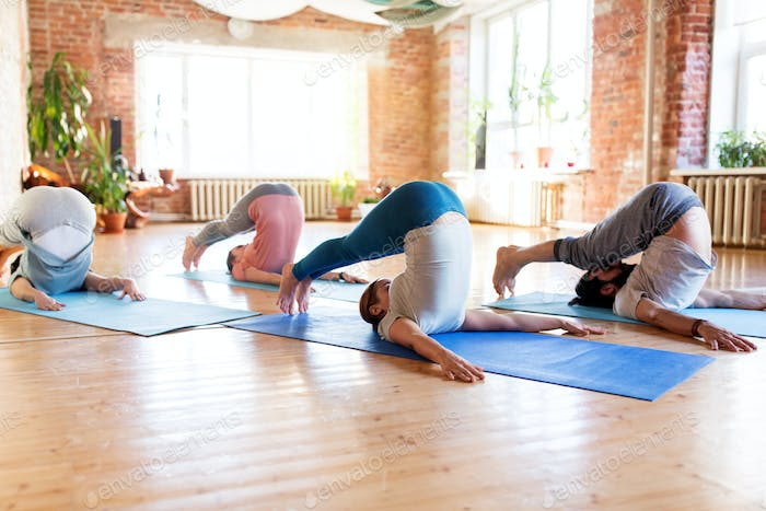 group of people doing plow pose at yoga studio