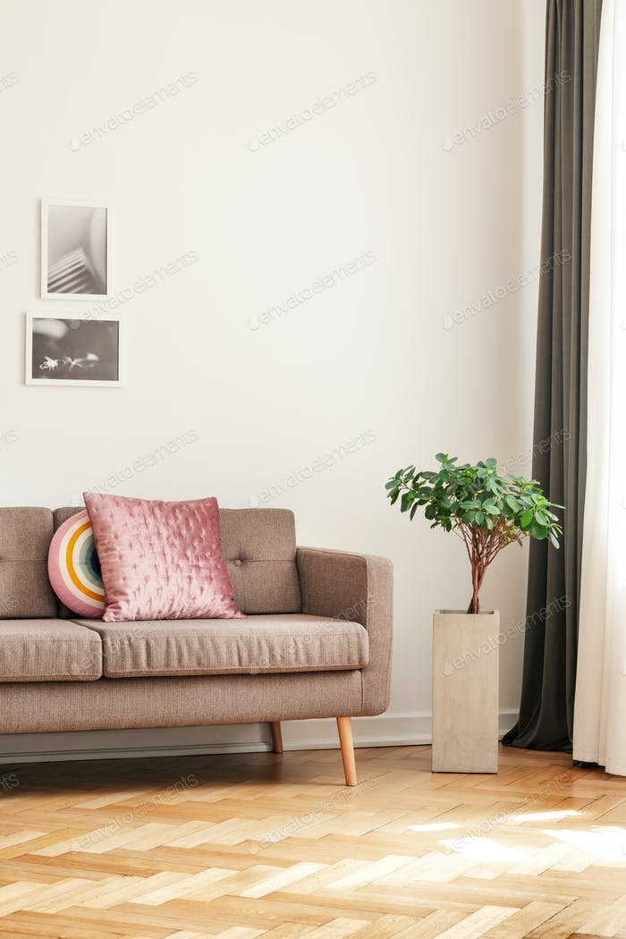 Plant next to sofa with pillows in living room interior with woo