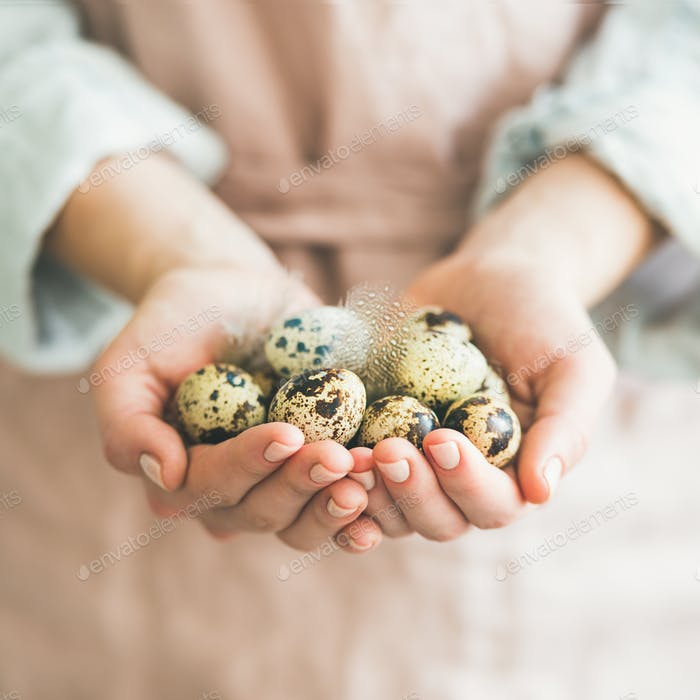 Natural colored quail eggs and feather in woman's hands