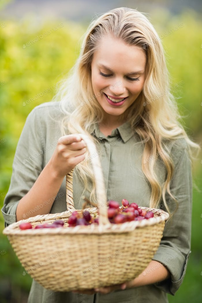 Standing blonde winegrower looking at her red grapes basket