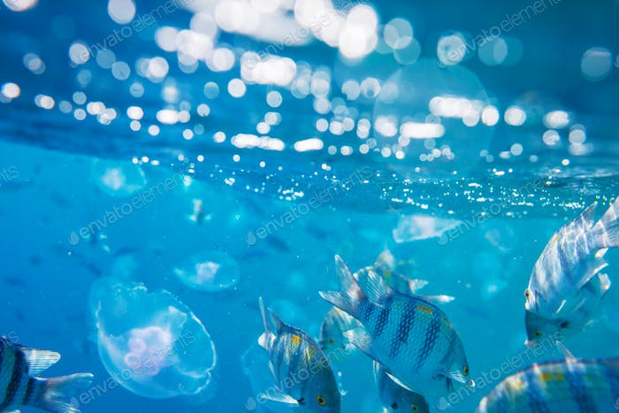 Fish underwater