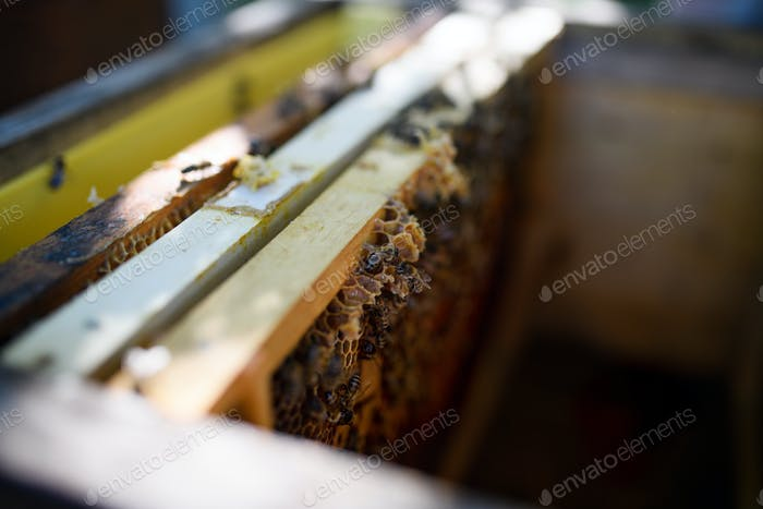 Top view of bees on honeycomb frames in the hive