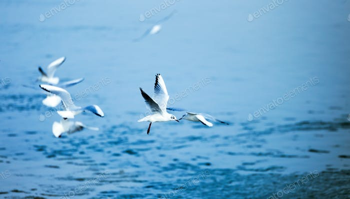Beautiful seagulls flying