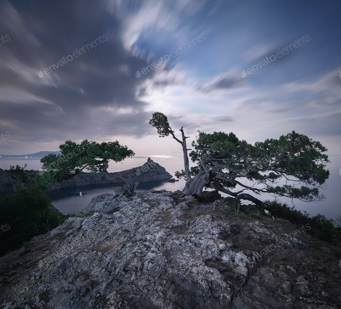 Night landscape with beautiful tree at mountains with moonlight