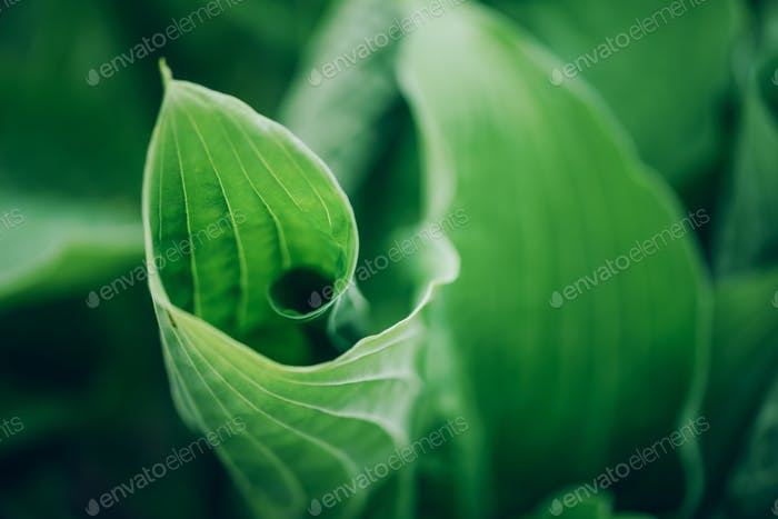 Fresh green foliage. Leaves background. Green dynamic backdrop for your design. Tropical leaf