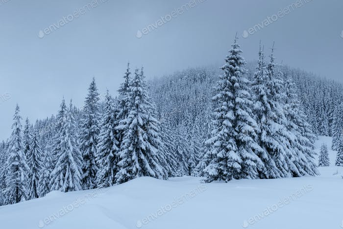 Mysterious winter landscape, majestic mountains with snow covered tree. Photo greeting card