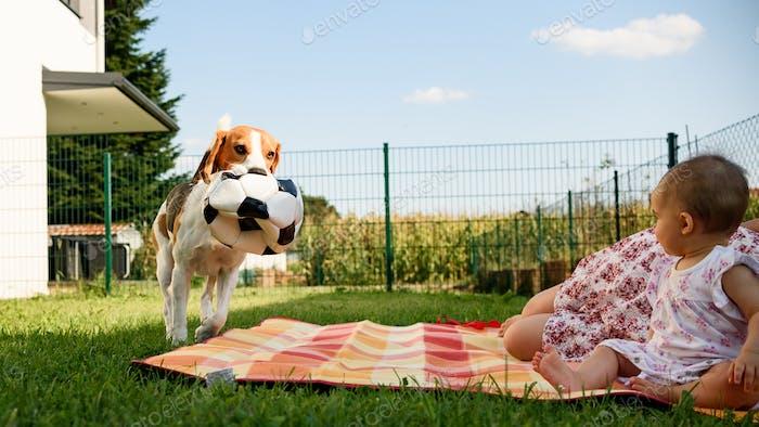 Entzückendes Baby Mädchen mit Mutter und laufender Beagle Familie Hund auf bunten Decke auf grünem Gras
