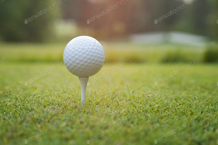 Close Up of Golf Ball on Tee in Late Afternoon
