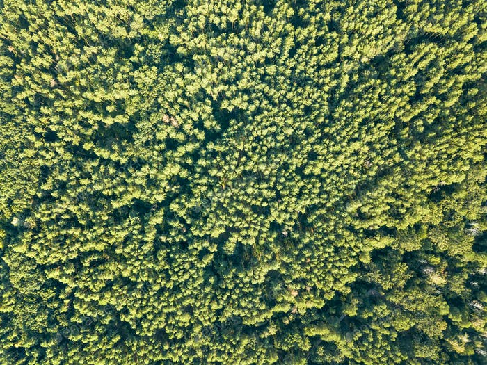 Aerial view of the drone on the greenery of trees on a summer day. Natural background