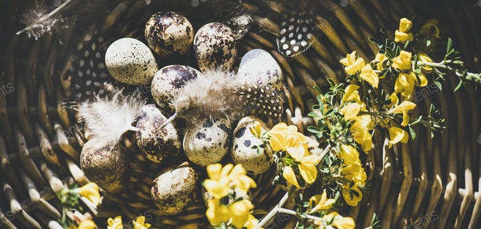 Easter holiday greeting card with quail eggs, wide composition