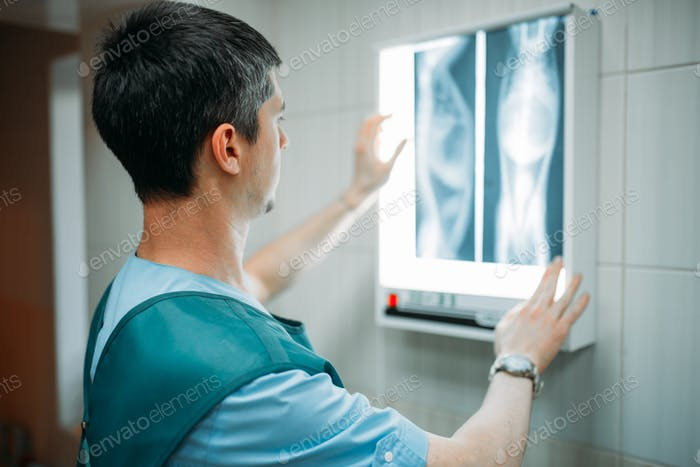 Veterinarian looks at the x-ray, veterinary clinic
