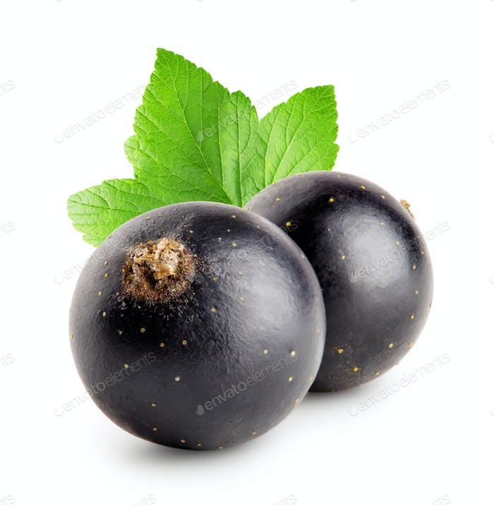 Two black currant with leaf