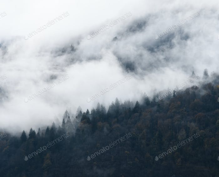 foggy autumn mountains