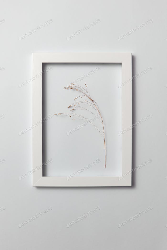 Natural organic frame with dry plant branch on a light gray background