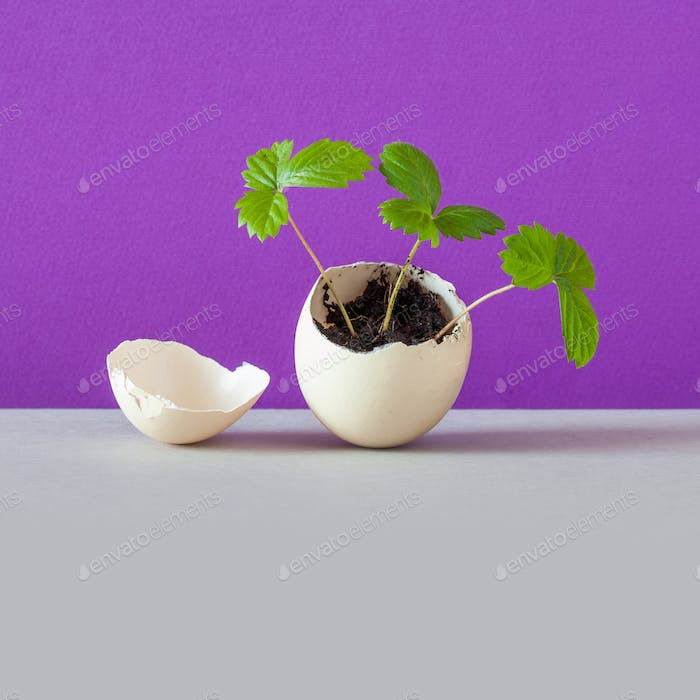 Life energy concept. Sprouts in an eggshell.