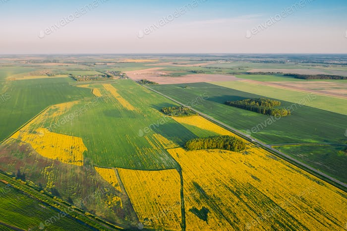 Natural Green Field Mit Trails Linien In Blooming Canola Gelb