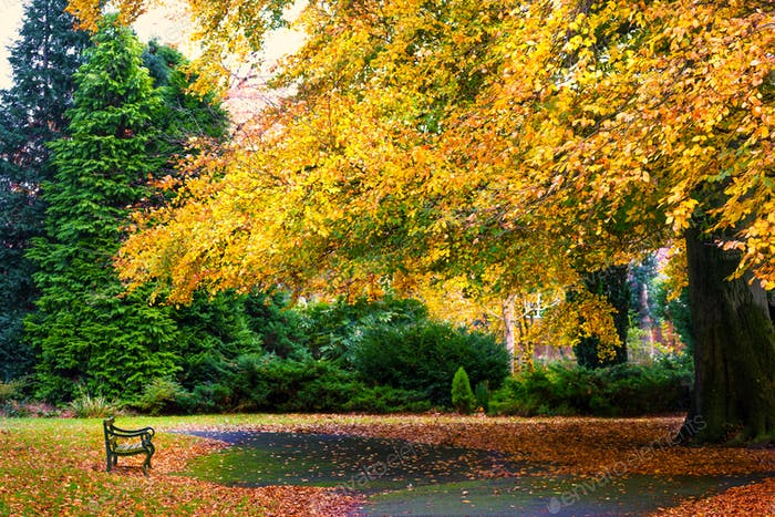 Colourful autumn trees with yellow leaves in English Park