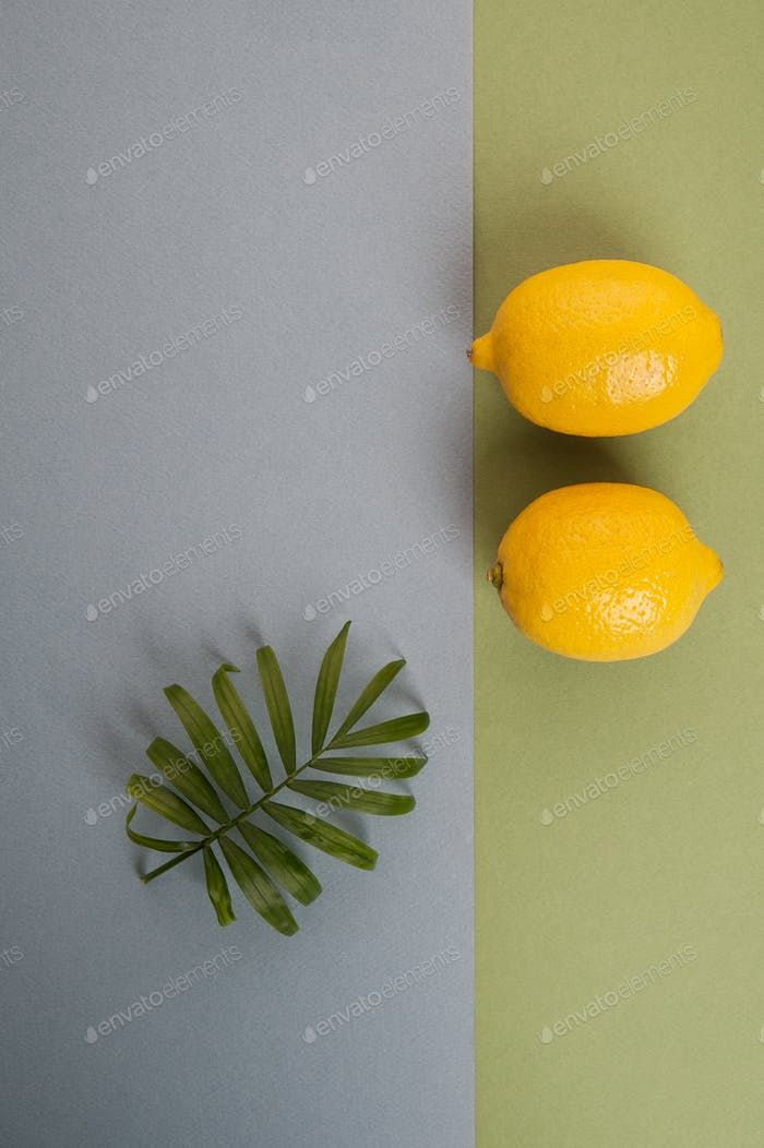 Minimalistic composition with two ripe lemon and green leaves on