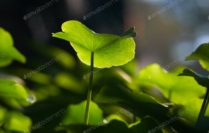 Green leaf with light and shadow