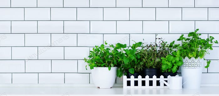 Mint, thyme, basil, parsley - aromatic kitchen herbs in white wooden crate on kitchen table, brick