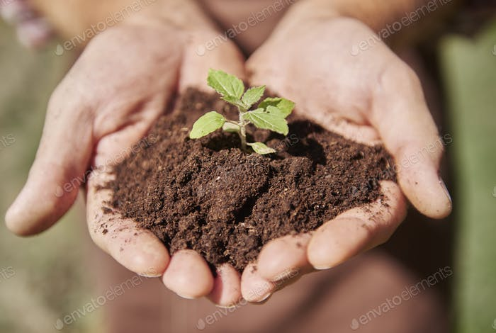 We must planting for the future