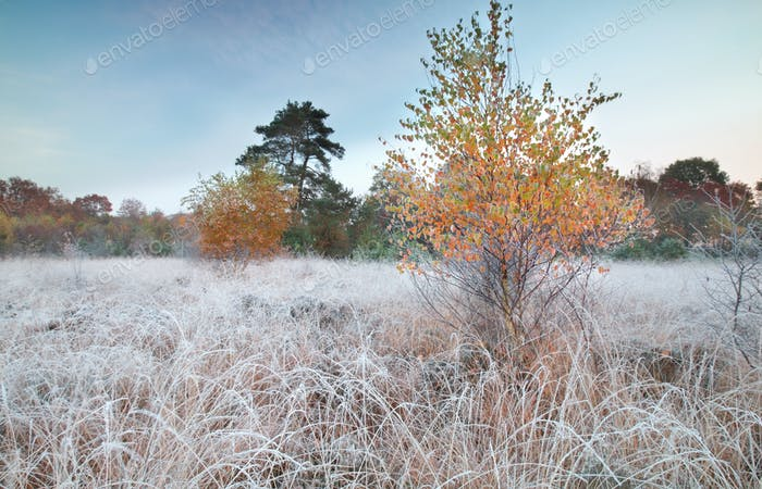 autumn frosty morning