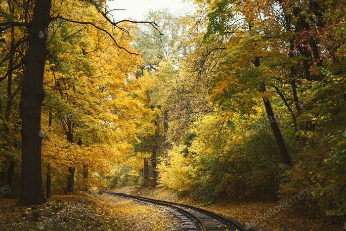 Fall landscape with railway tracks running through autumn forest