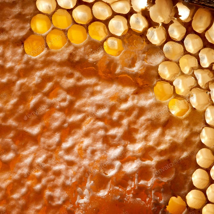 Macro photo of wax honeycombs with organic honey. Healthy product. Top view
