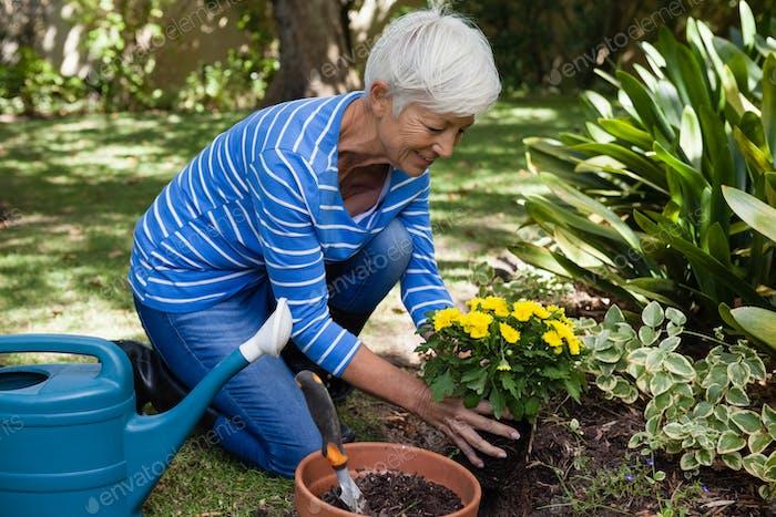 Lächelnde Senior Frau Pflanzen gelbe Blumen