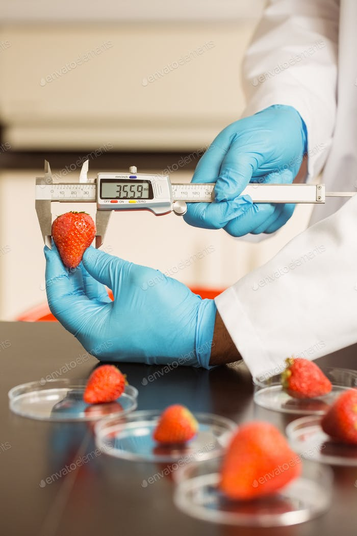 Food scientist measuring a strawberry at the university