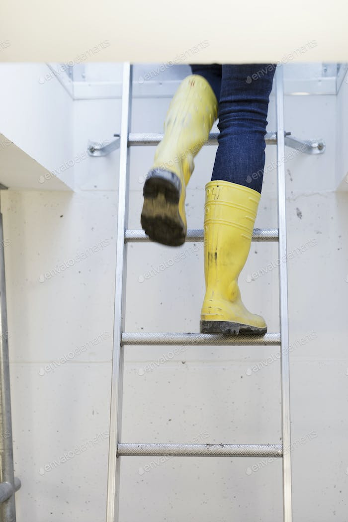 Low section of person wearing boots while moving up ladder