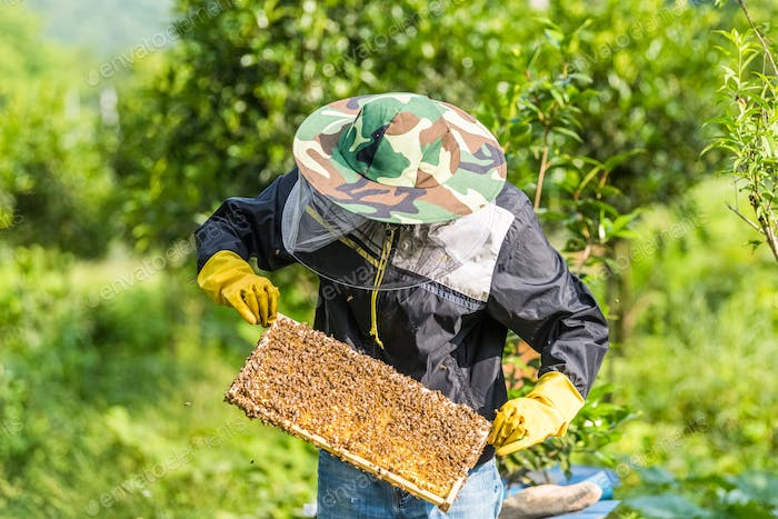 beekeeper working with bees and honeycomb