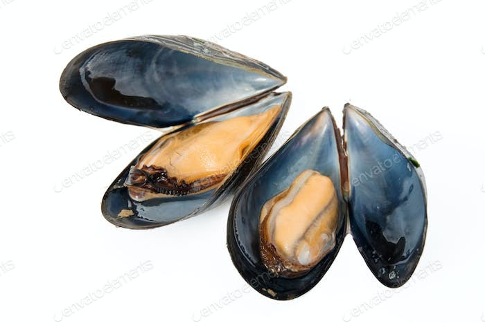 two boiled mussels