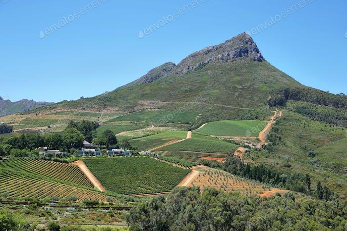Vineyards landscape in Delaire Graff estate