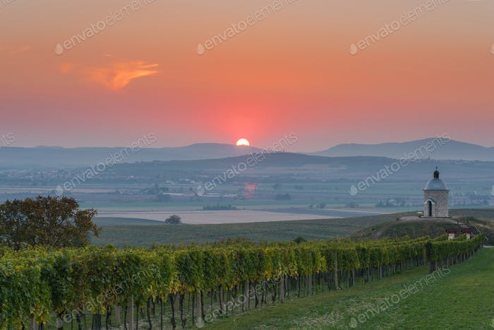 Sunrise over vineyards and coutryside in Moravia