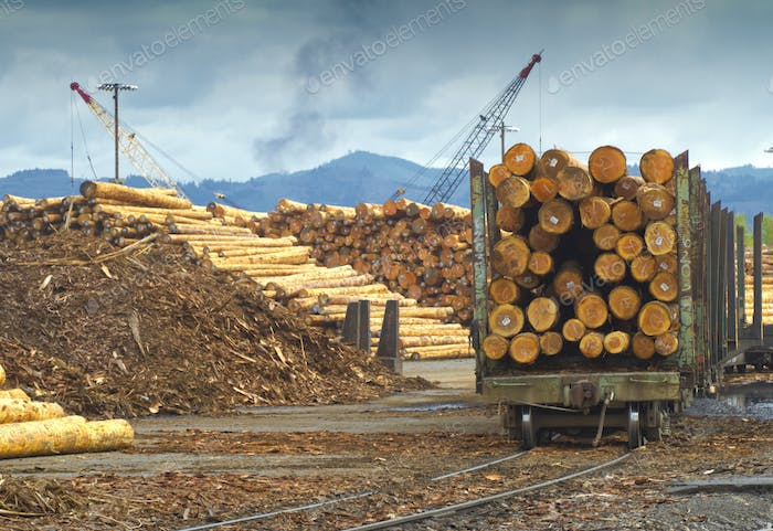 Logging Mill and Shipment