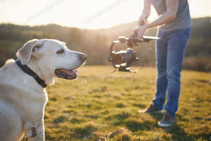 Cute dog posing for filming on meadow