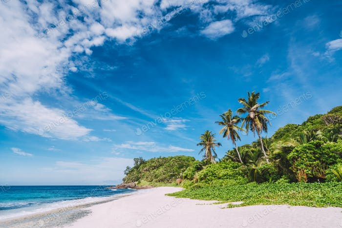 Tropical remote secluded sandy beach with coconut palm trees and blue sky with moving white clouds