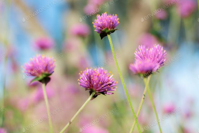 Purple flower at sunlight