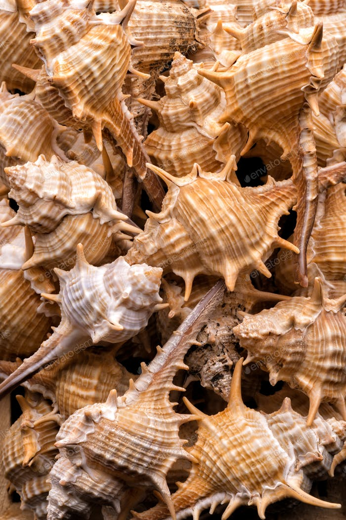 Seashells collection background