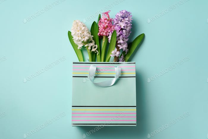 Spring hyacinth flowers in shopping paper bag on blue punchy pastel background. Banner with copy