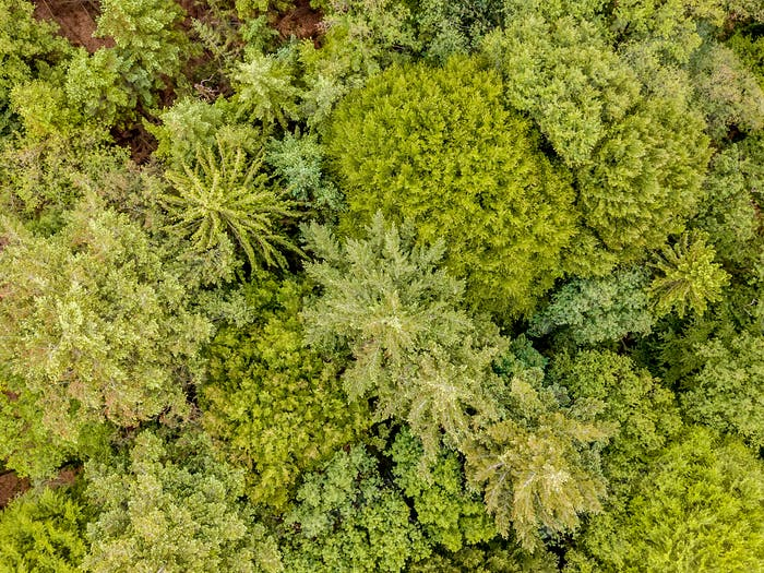 Aerial view mixed forest