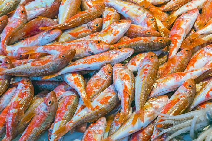 Red mullet for sale in Sicily