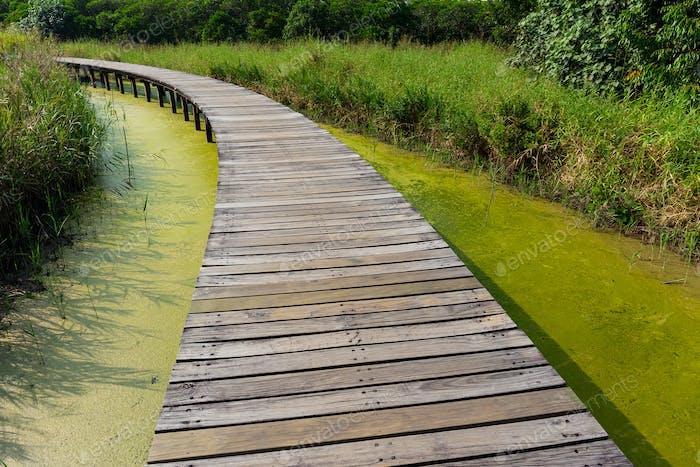Wooden bridge footpath in forest