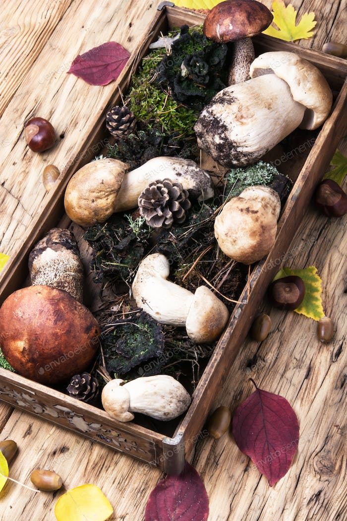 box with forest mushrooms