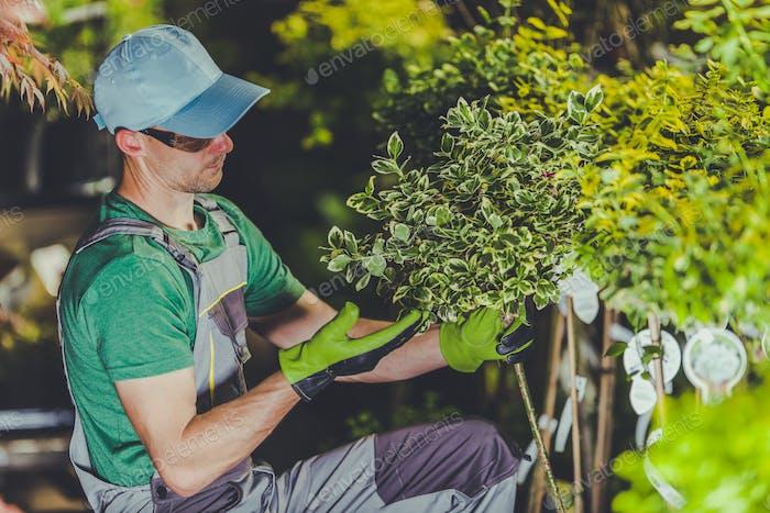 Pflege von Gartenpflanzen