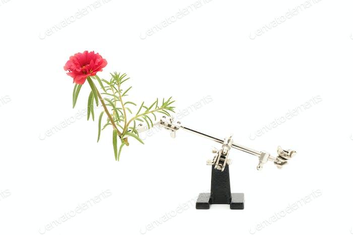 Flower Macro Photography Setup